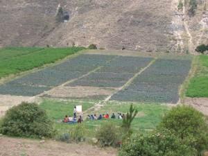 Ausbildung in Anbau von Feldfrüchten in Ecuador